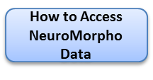 How to Access NeuroMorpho Data