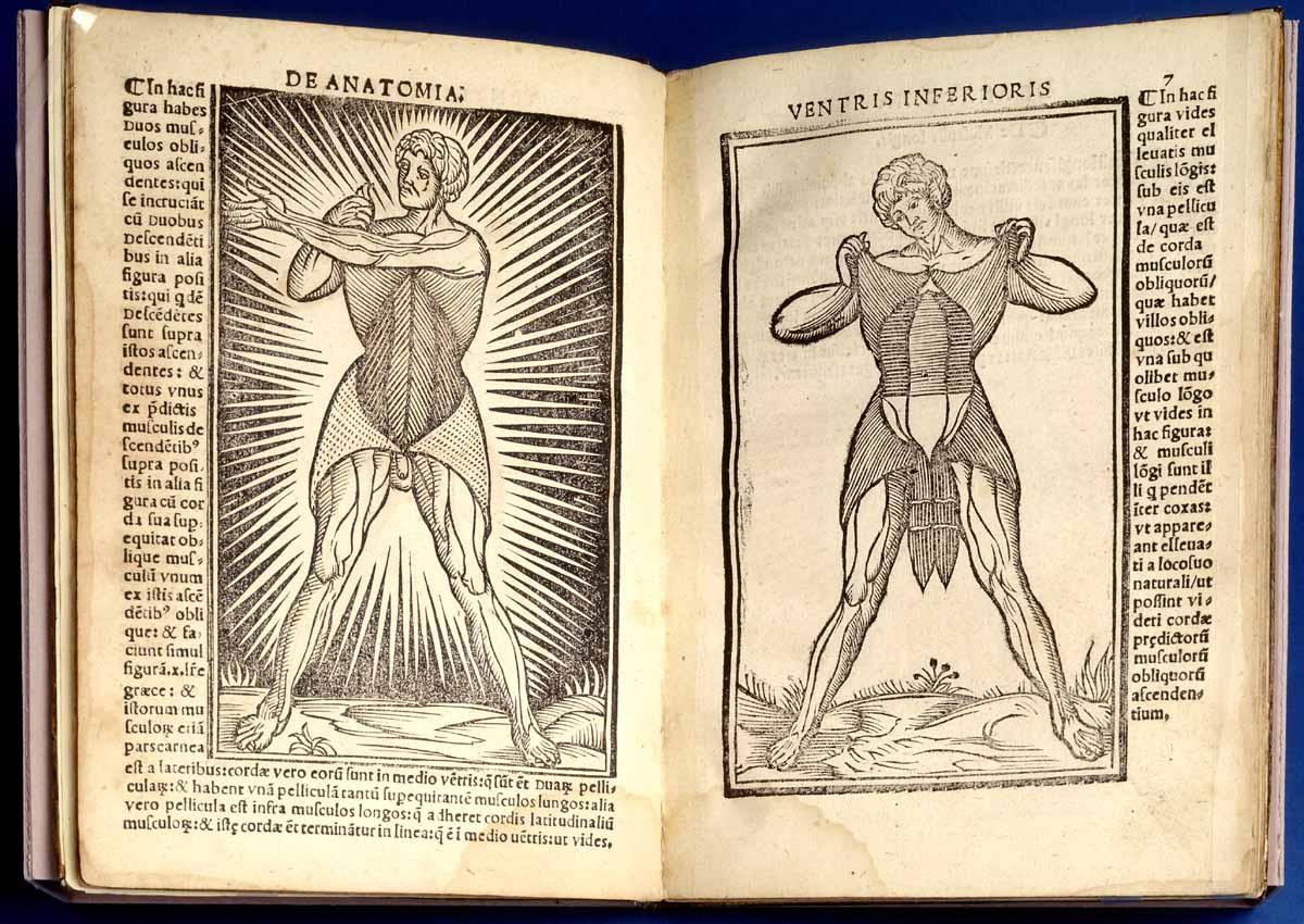 Dream Anatomy: Gallery: Jacopo Berengario da Carpi: Anatomia Carpi