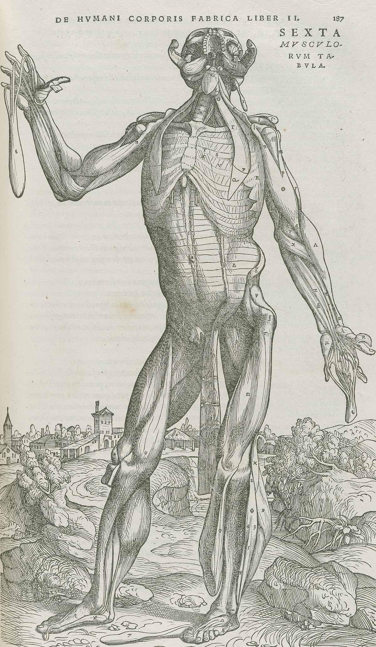 Dream Anatomy Gallery Andreas Vesalius De Humani Corporis Fabrica
