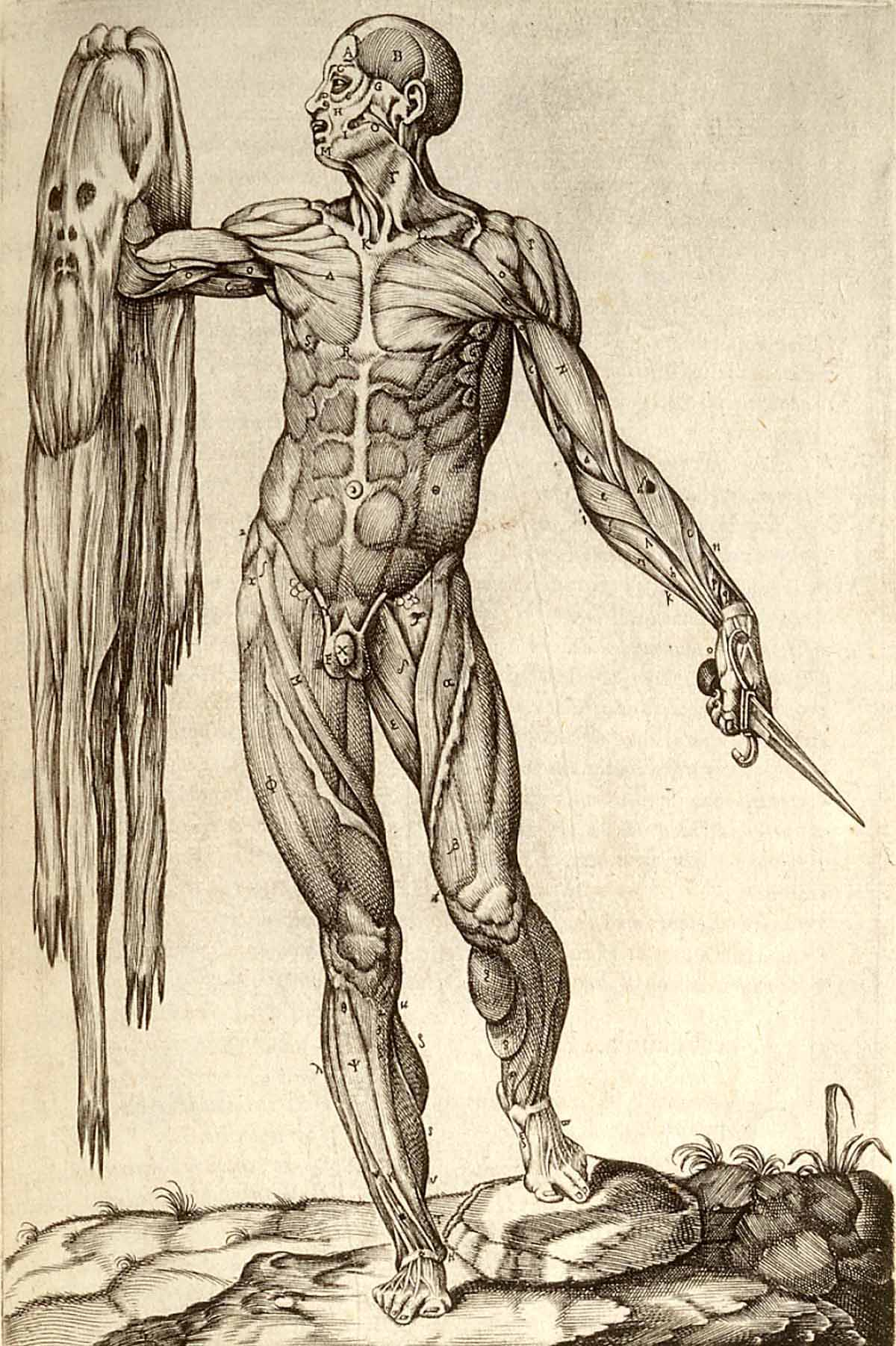 Renaissance Anatomy Drawing Of Flayed Cadaver Holding Own Skin