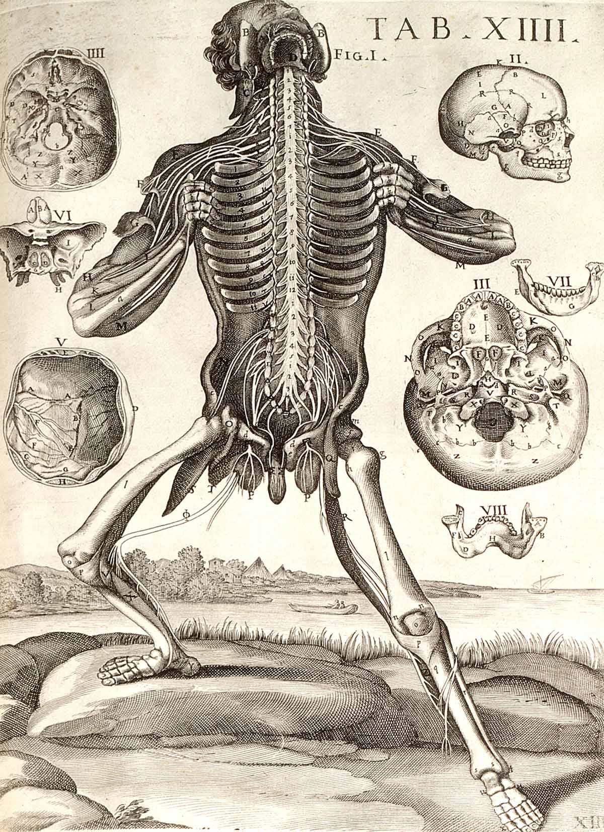 Dream Anatomy: Gallery: Pietro Berrettini da Cortona: Tabulae ...