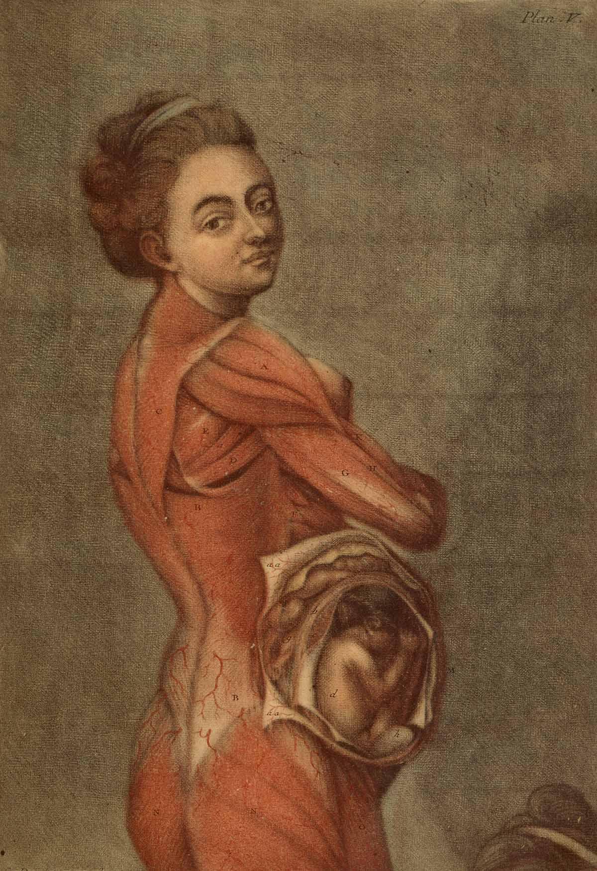 Dream Anatomy: Gallery: Gautier D\'Agoty and Duverney: Anatomie des ...