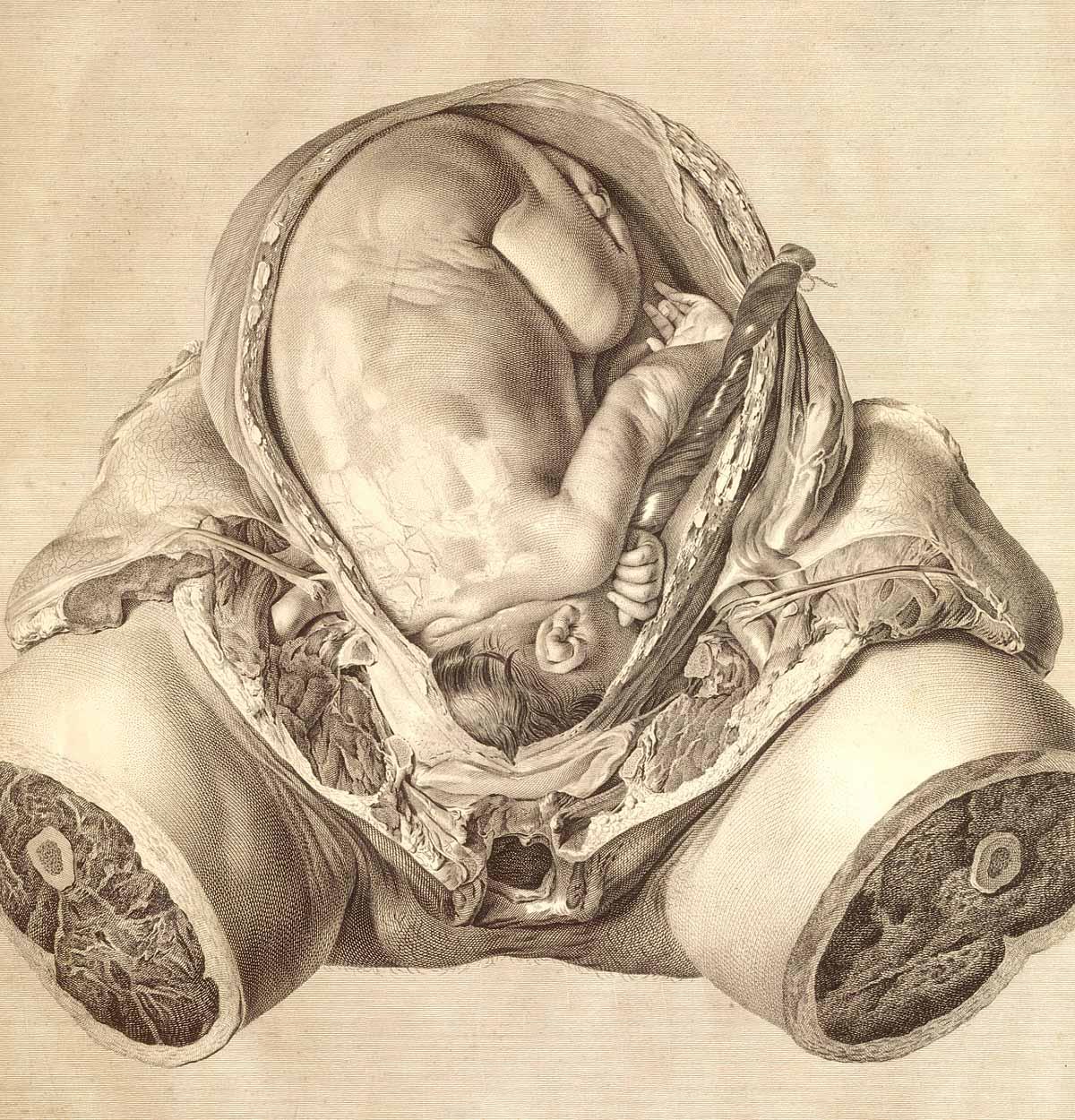 Dream Anatomy Gallery William Hunter And Jan Van Riemsdyk The