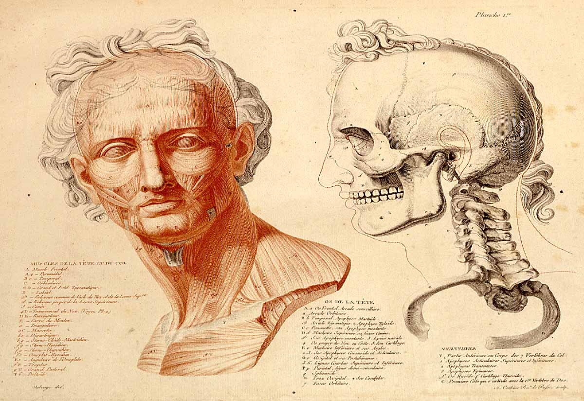 Dissection for study romans