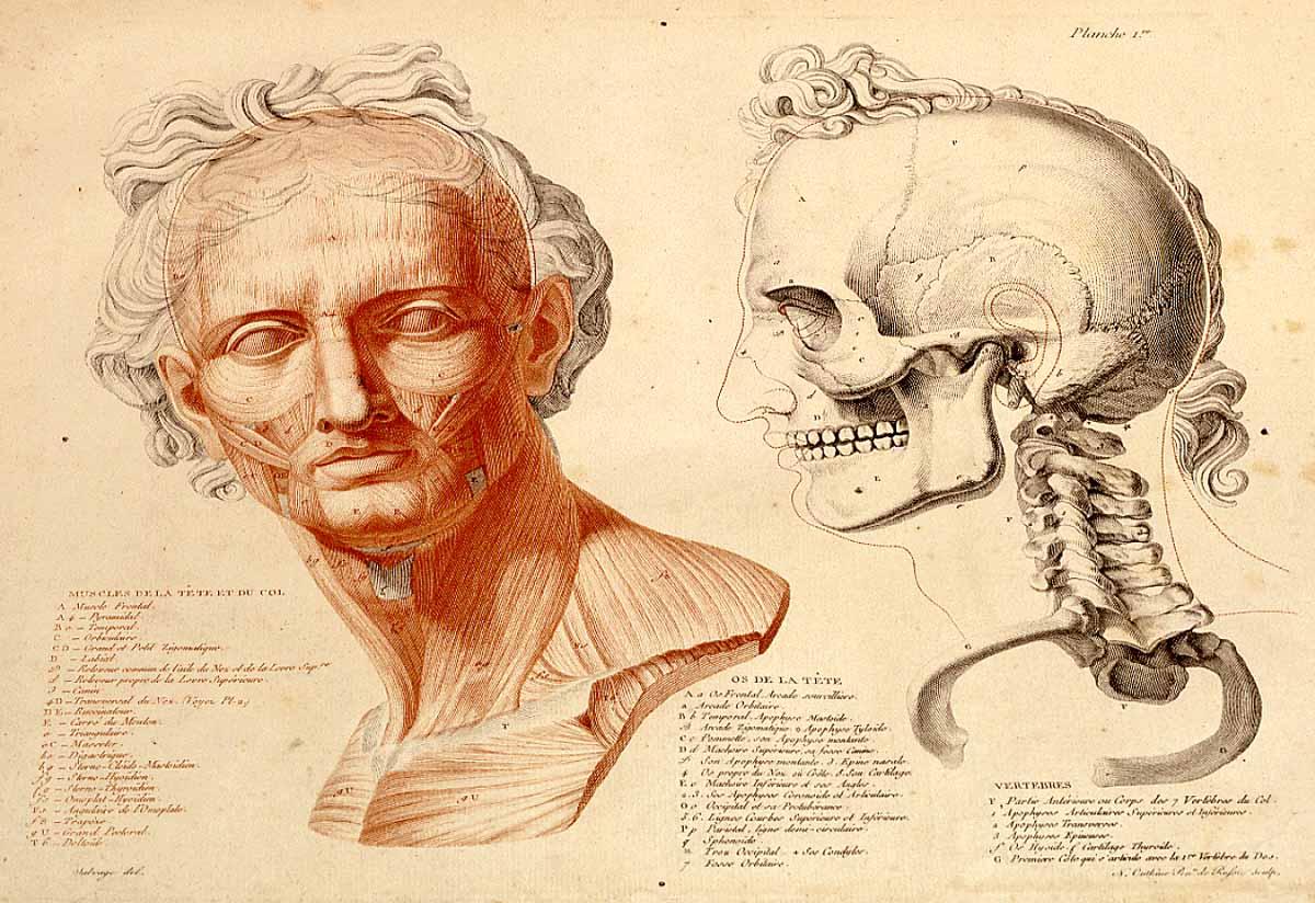 Dream Anatomy Gallery Jean Galbert Salvage Anatomie Du Gladiateur