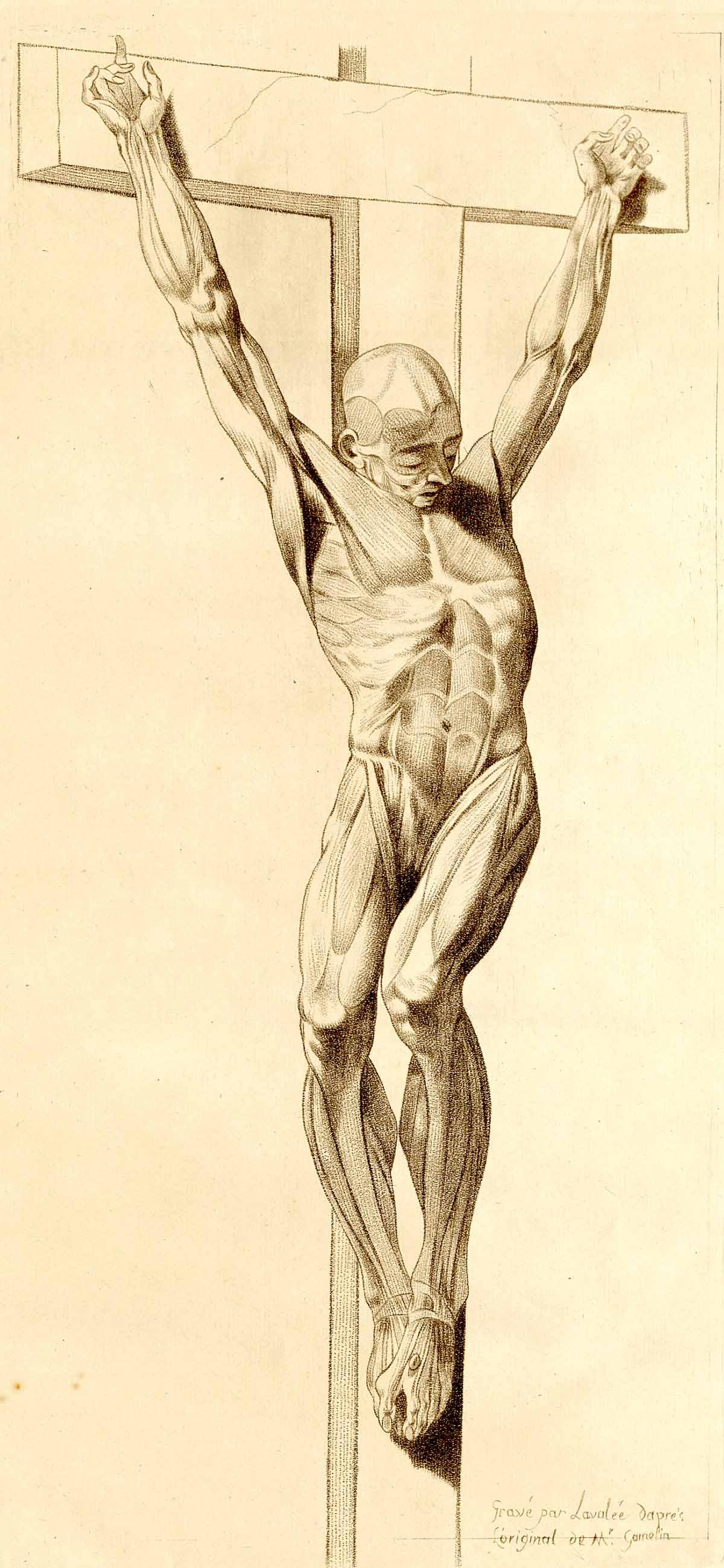 Dream Anatomy Gallery Jacques Gamelin Nouveau Recueil Dostologie