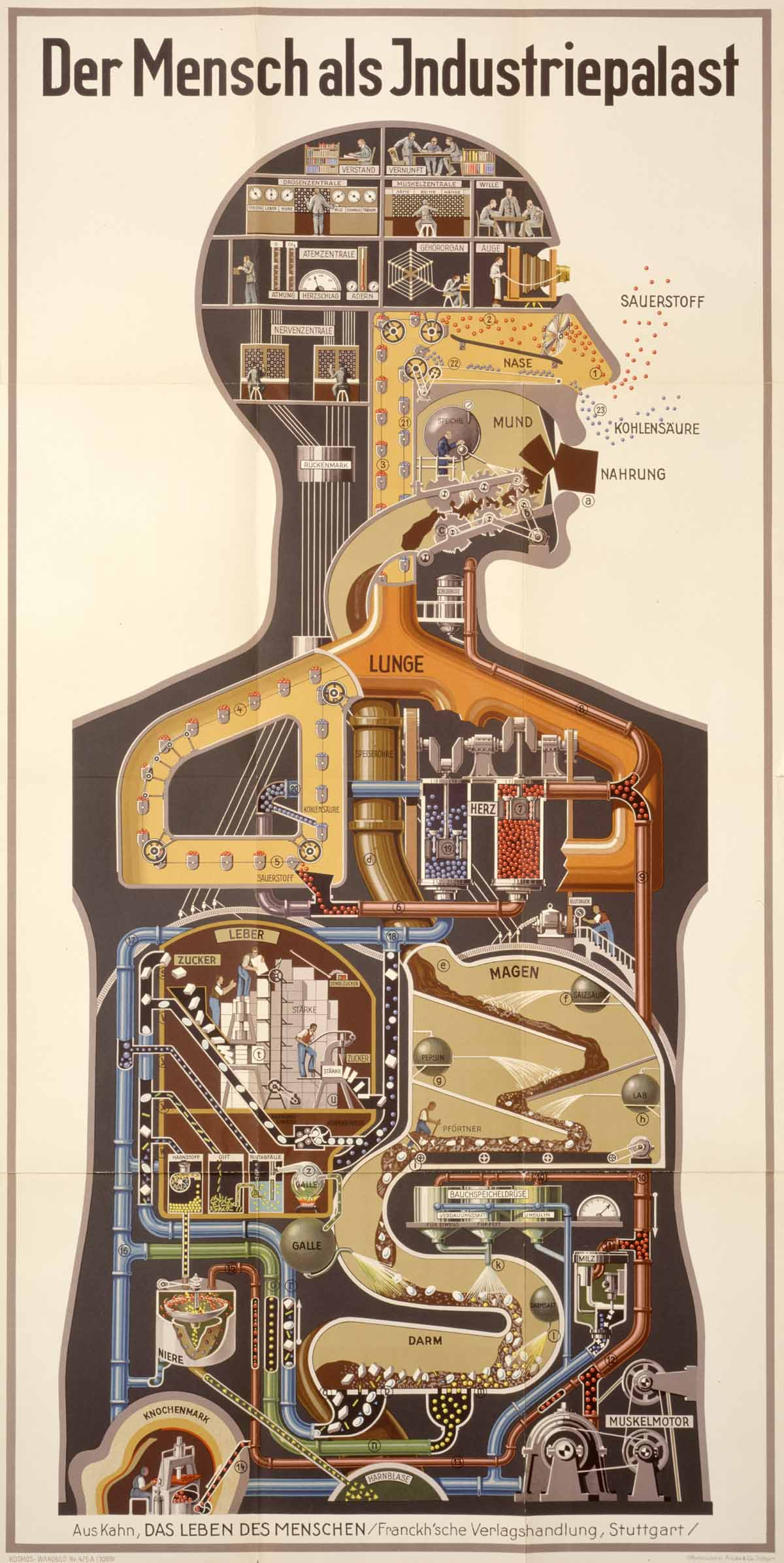 dream anatomy gallery fritz kahn man as industrial palace. Black Bedroom Furniture Sets. Home Design Ideas
