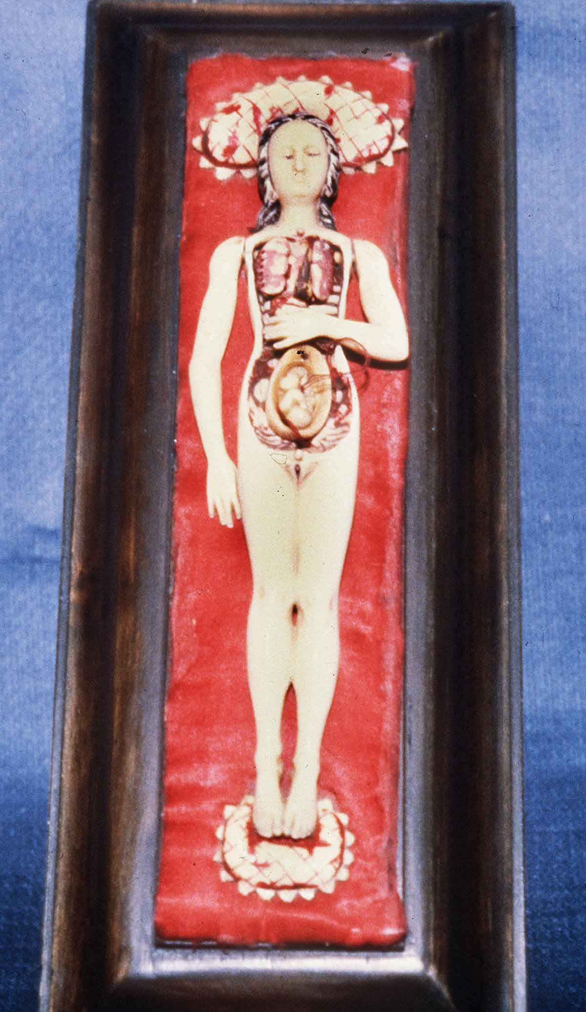 Dream Anatomy Gallery Anatomical Manikin 1
