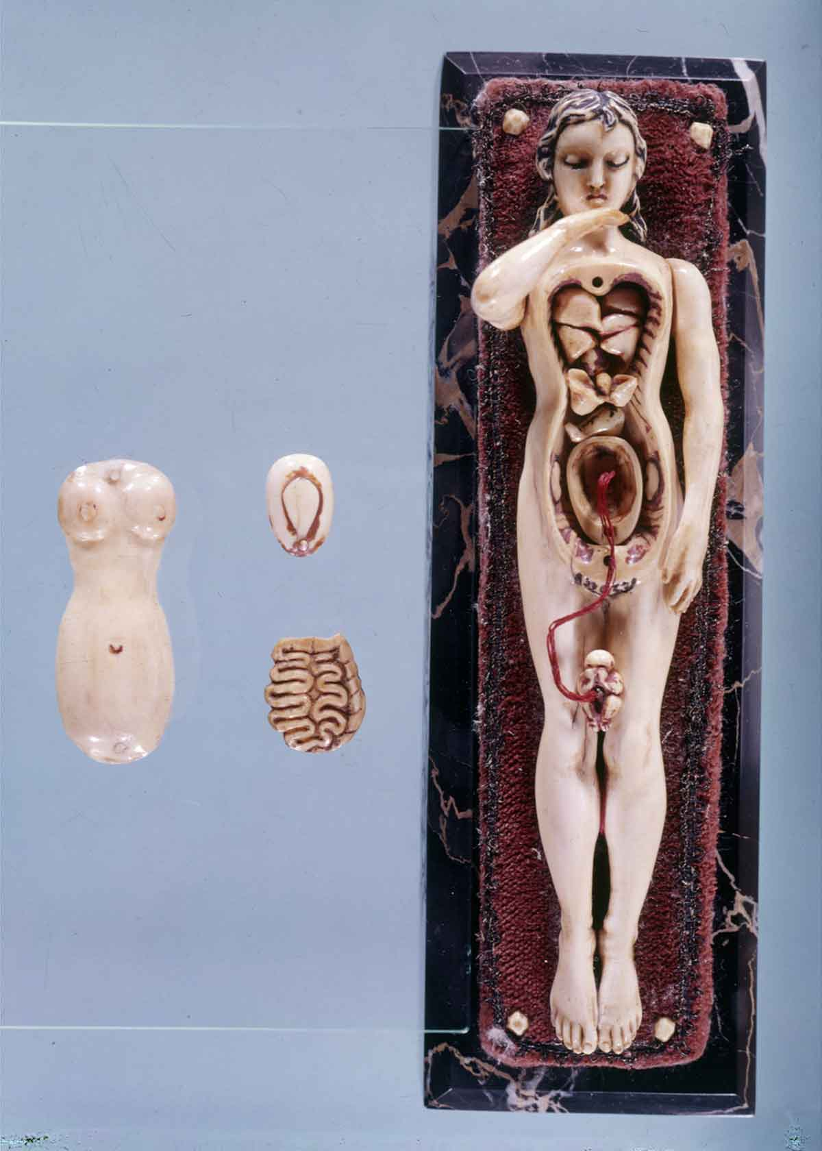 Dream Anatomy: Gallery: Anatomical Manikin 2