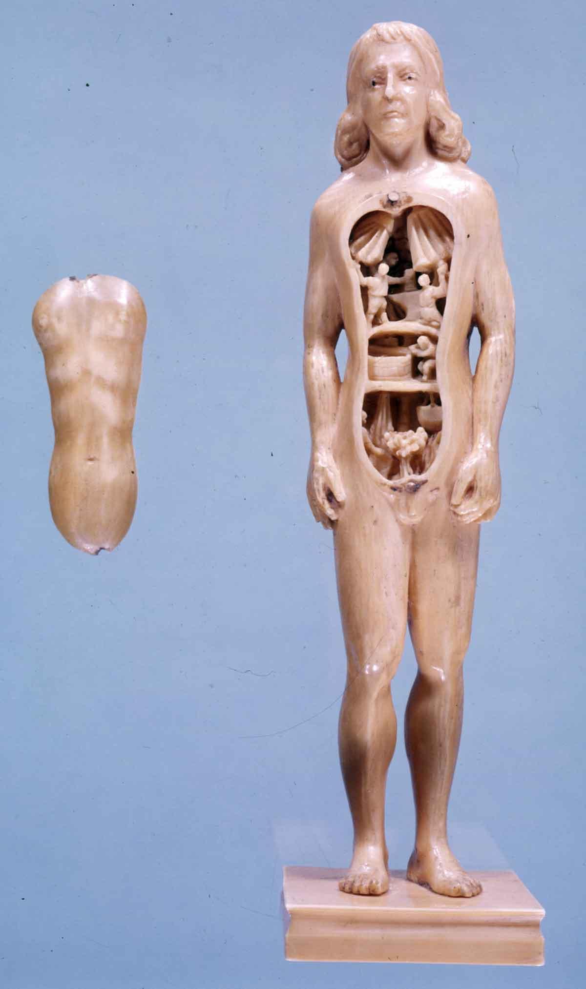 Dream Anatomy: Gallery: Anatomical Manikin 3