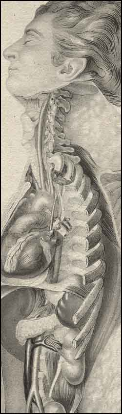 History of human anatomy
