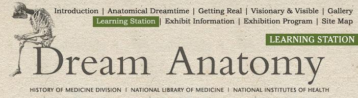 Dream Anatomy Learning Station Educators Corner Anatomical Metaphors