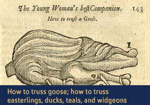 <a href='/gallery/fireandfreedom/explore/artoftrussing/e/'>5. How to truss goose; how to truss easterlings, ducks, teals, and widgeons</a>                         <h4>How to truss a pigeon; how to truss a fowl for boiling from <em>Young Woman's Best Companion</em>, 1770</h4> 						<h5>Courtesy National Library of Medicine</h5>                          <p>On these two pages Jackson describes how to truss a goose with two skewers, and how to truss smaller birds such as easterlings, ducks, teals, and widgeons with one skewer. In each case the cook must first gut the bird and remove the 'pinions' (the outer wing tips). To truss a smaller bird, in a series of coordinated steps the cook must raise up the legs, twist the feet and bring them toward the body, and insert a skewer between the lower joint next to the thigh and foot.</p>