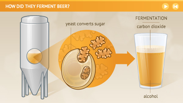 fermentation of yeast with carbohydrates Beer and wine are produced by fermenting glucose with yeast yeast contains enzymes that catalyse the breakdown of glucose to ethanol and carbon dioxide in this experiment, a glucose solution is left to ferment students then test for fermentation products.