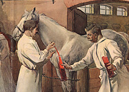 Four men in white smocks extract blood from two horses in a stable.