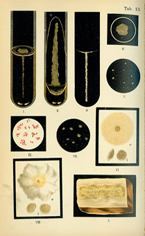 Color plate with ten illustrations of lactic acid bacteria growing in test tubes and on culture plates.