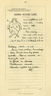 Lined card with printed heading, handwritten notations, and rough outline drawing of a guinea pig.