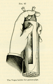 Drawing of a hand holding a guinea pig in a cylindrical guinea pig holder.  Guinea pig is in the holder head first with its hind feet sticking out from the open end.