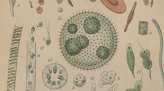 Graphic illustrations of various microbes numerically numbered