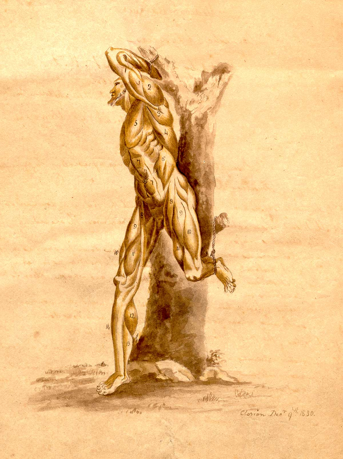 Historical Anatomies on the Web: Clorion