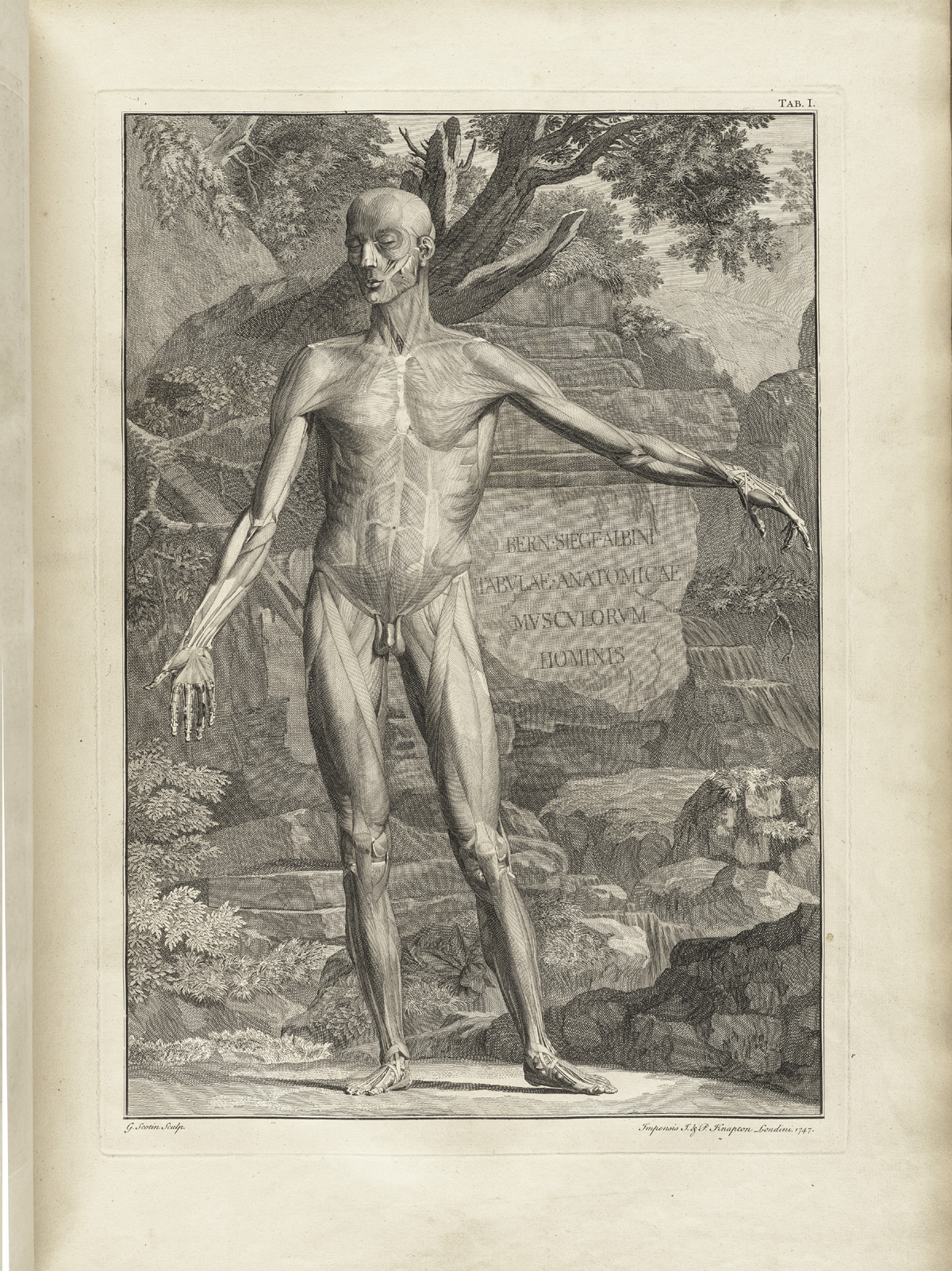 Historical Anatomies on the Web: Bernhard Seigfried Albinus Home