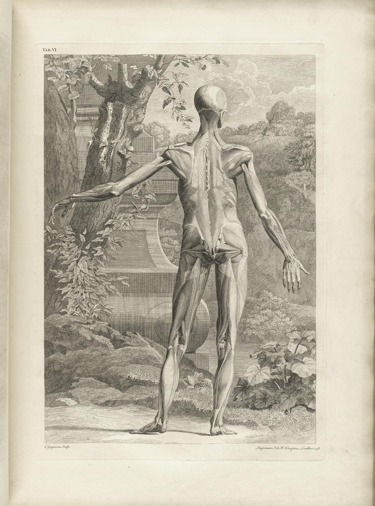 Ilustraciones antiguas de anatomía humana - Imágenes - Taringa!