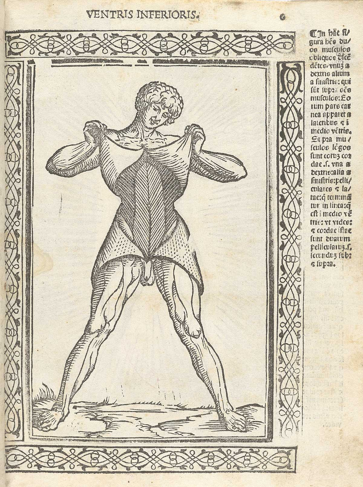 Woodcut of male anatomical figure raising the skin to give a view of his  abdominal muscles