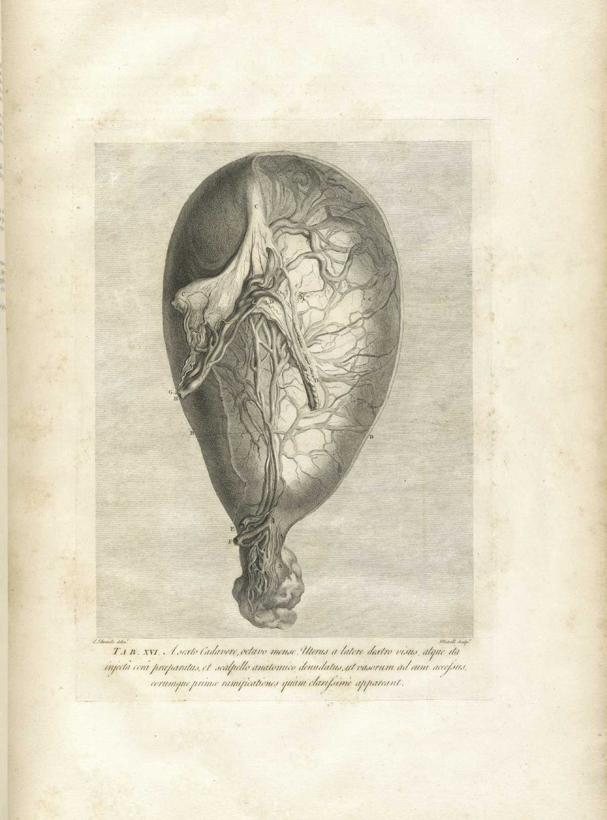 Historical Anatomies On The Web William Hunter Home