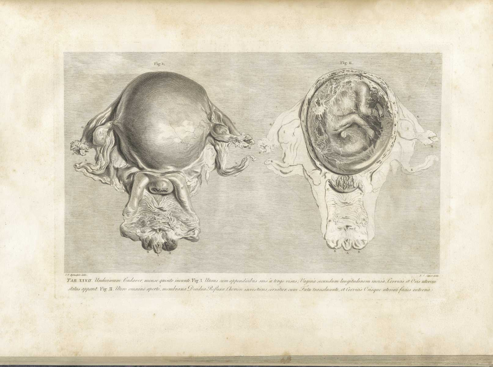 "Table 27, from William Hunter's ""The anatomy of the human gravid uterus exhibited in figures."" (1774)"