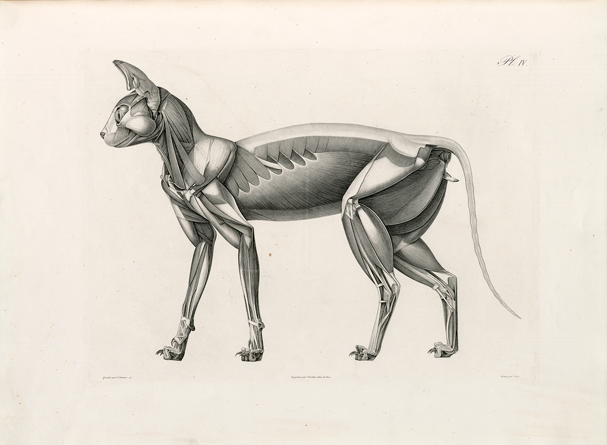 Top Historical Anatomies on the Web: Browse Titles ZE43