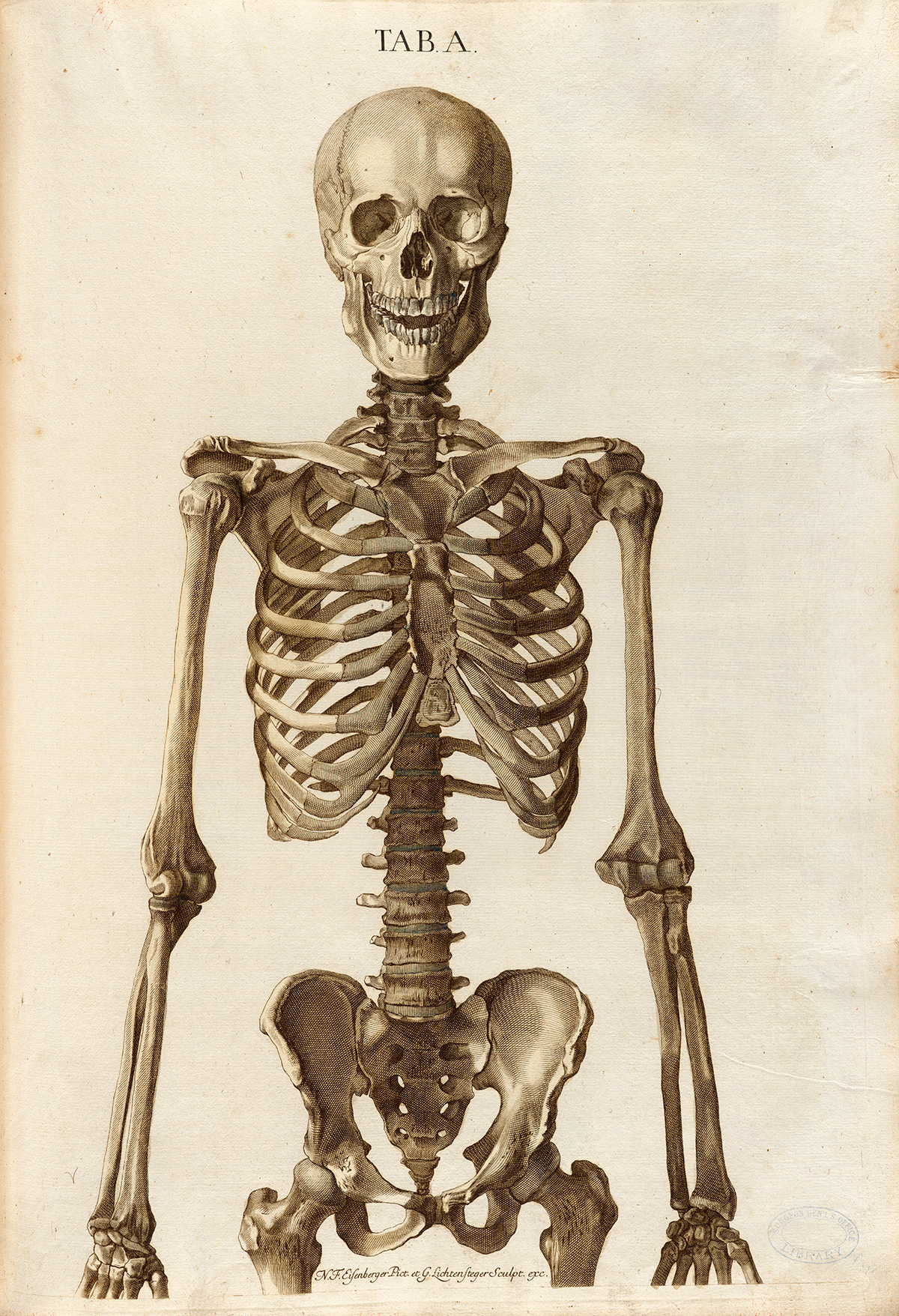 Historical Anatomies on the Web: Christoph Jacob Trew