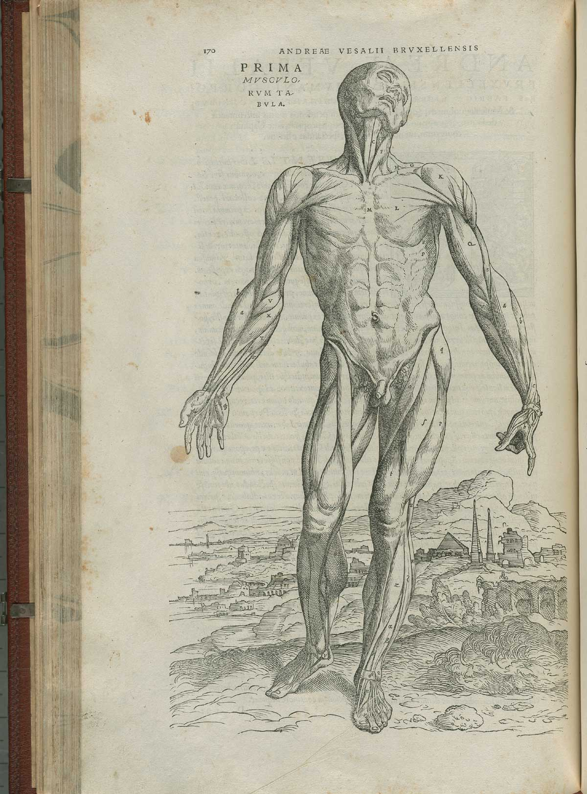 Turning The Pages Online: Vesalius Gallery