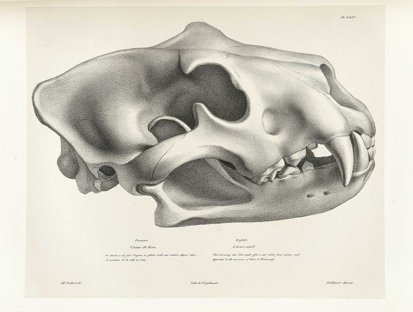 Historical Anatomies On The Web Joseph Vimont Home