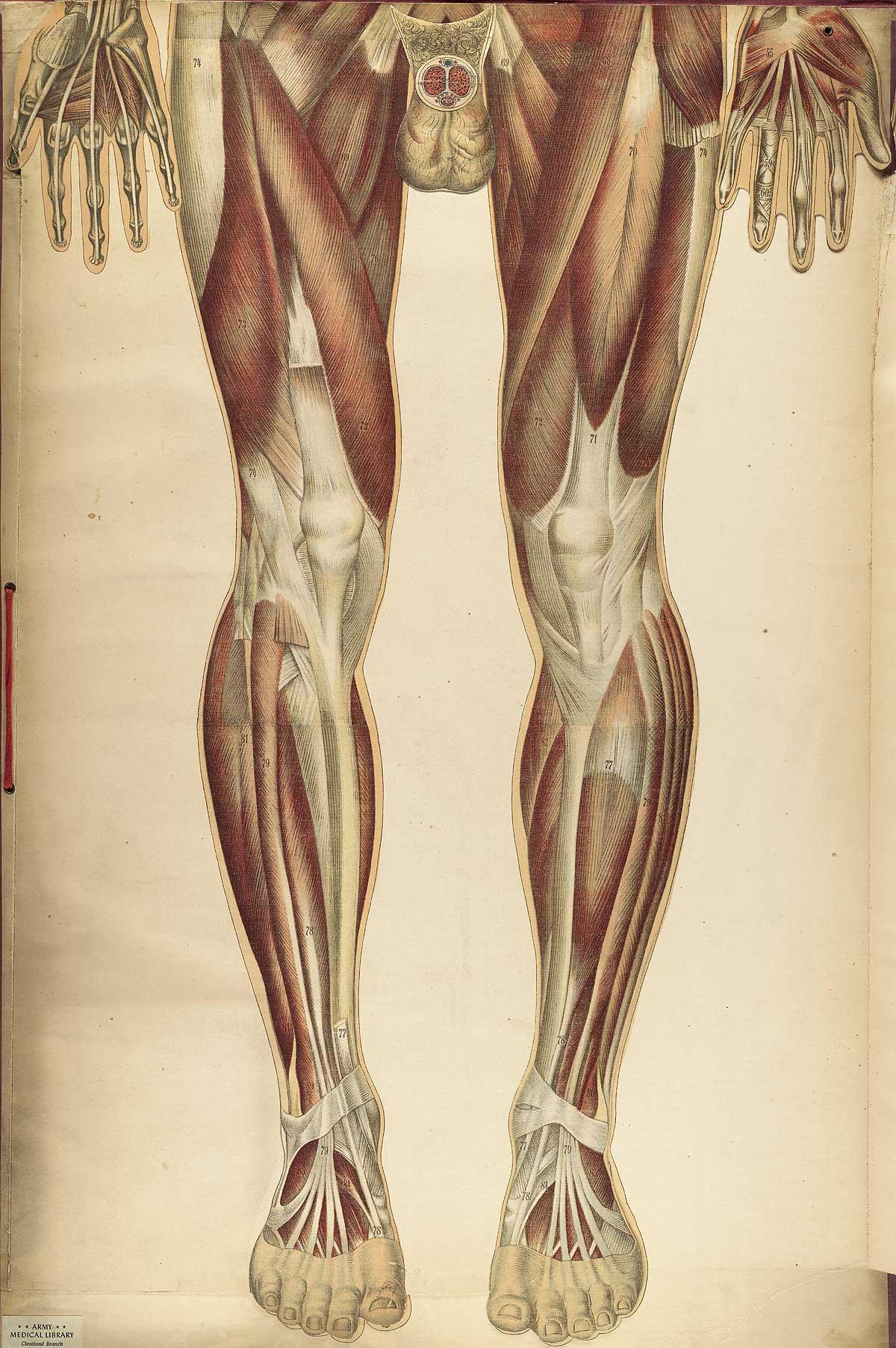 Historical Anatomies on the Web: Bouglé, Julien Home