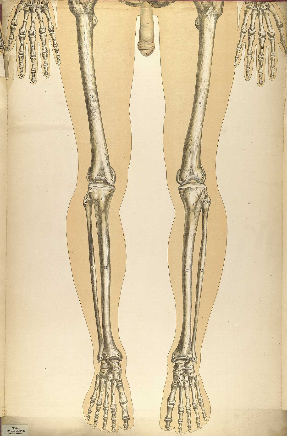 Historical Anatomies On The Web Bougl Julien Home