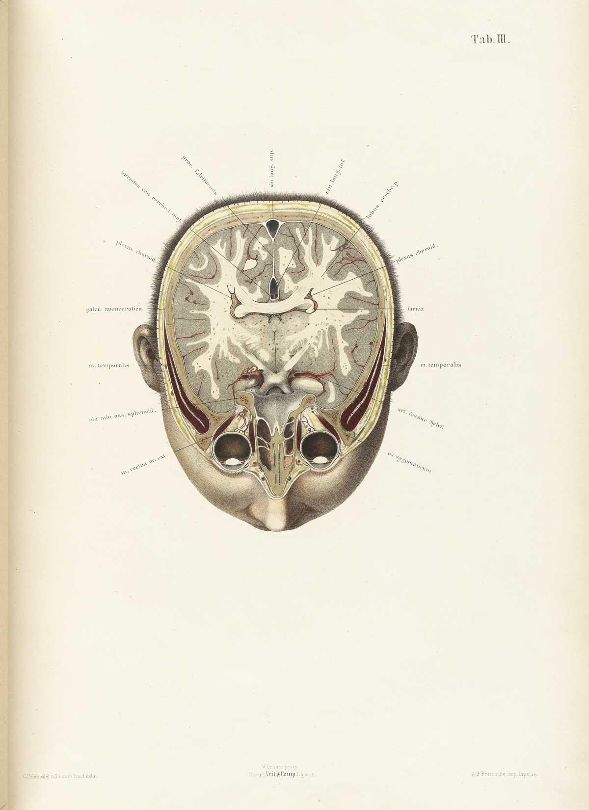 http://www.nlm.nih.gov/exhibition/historicalanatomies/Images/1200_pixels/braune03.jpg