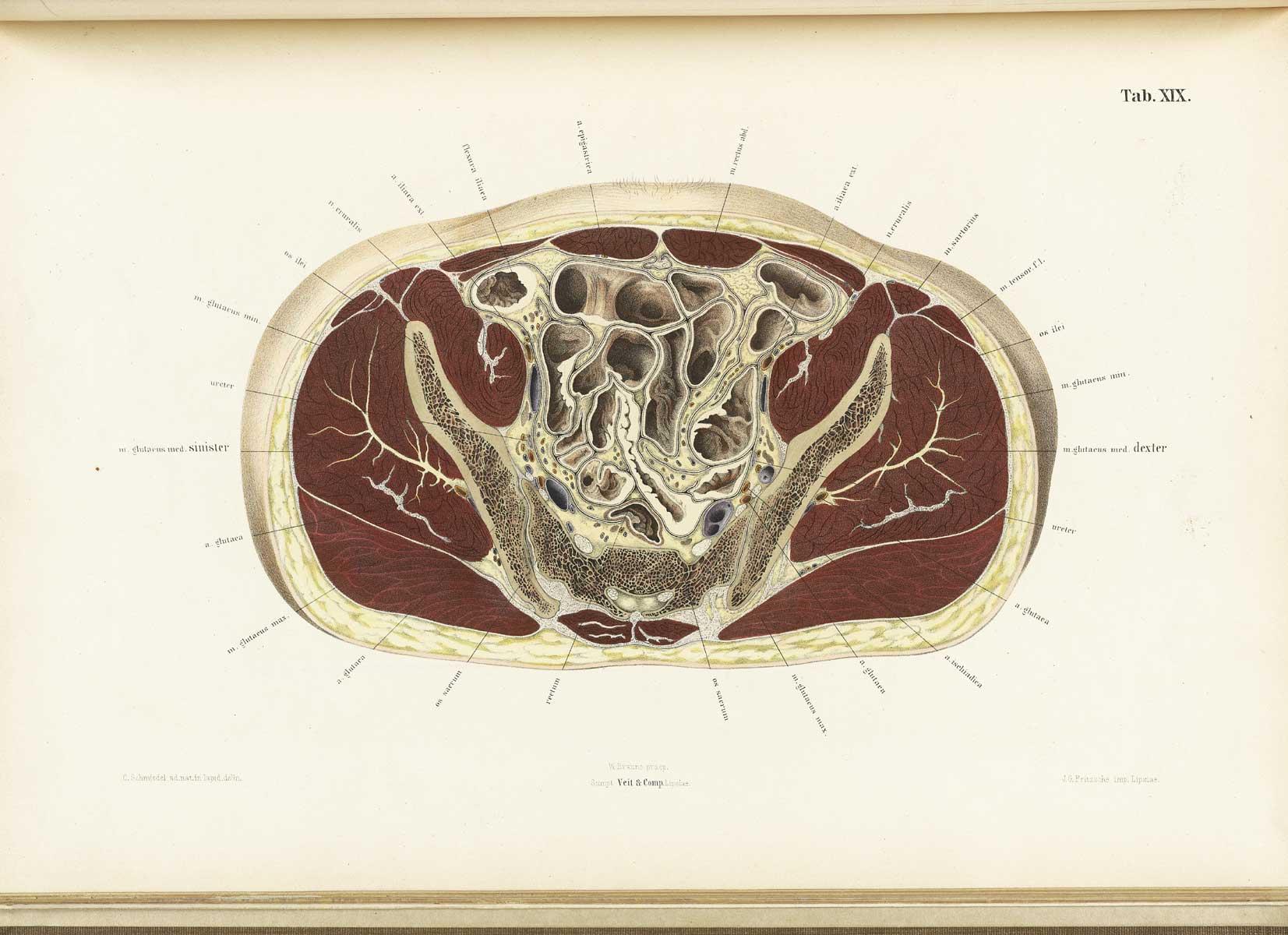 http://www.nlm.nih.gov/exhibition/historicalanatomies/Images/1200_pixels/braune19.jpg
