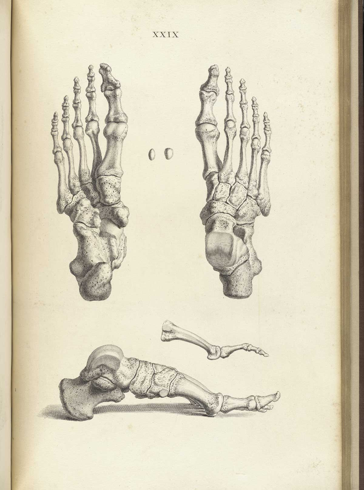 Foot Bone Anatomy How To Draw Feet With Structure 2018 12 28