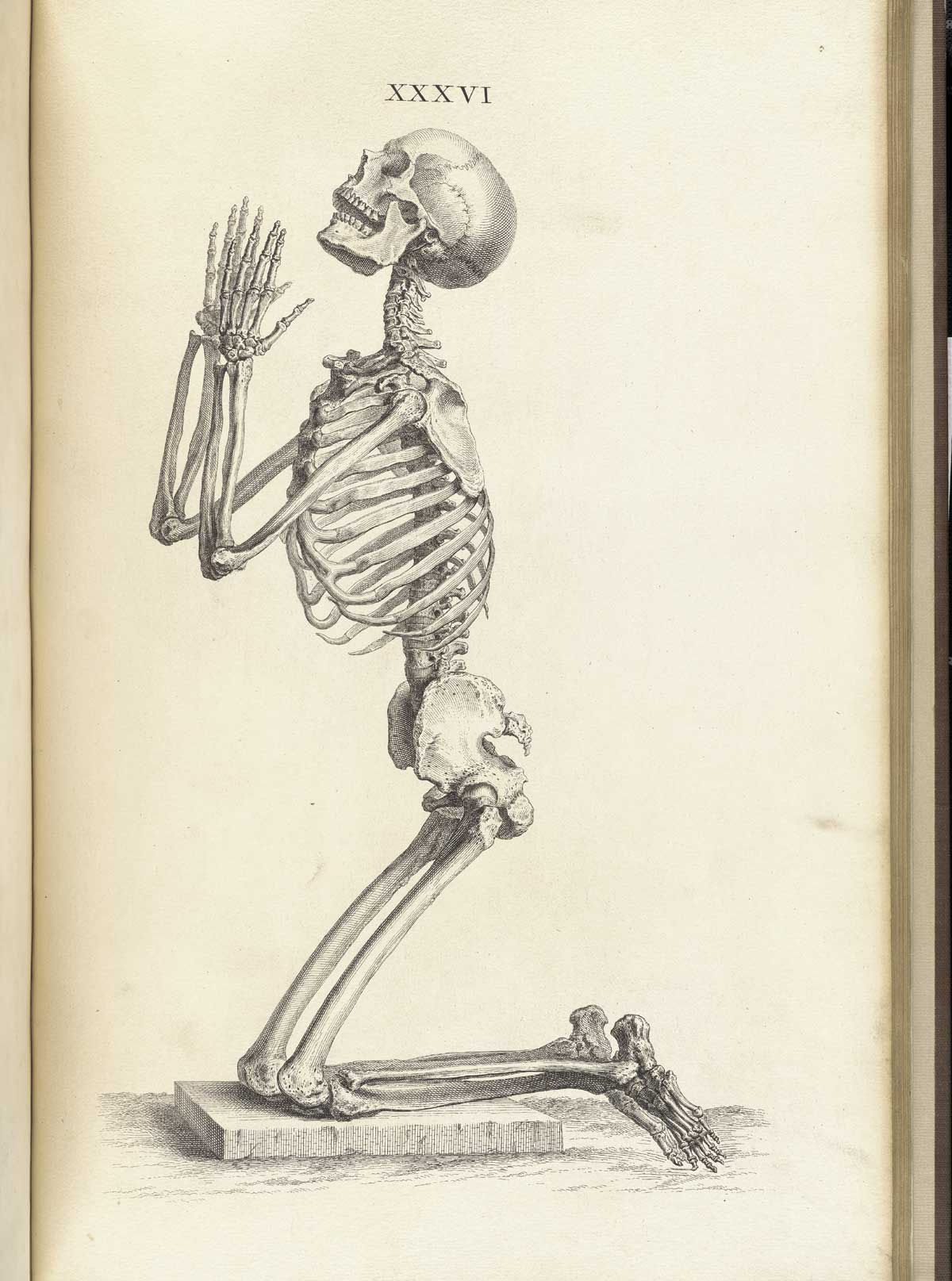 Historical Anatomies on the Web: William Cheselden Home  Historical Anat...