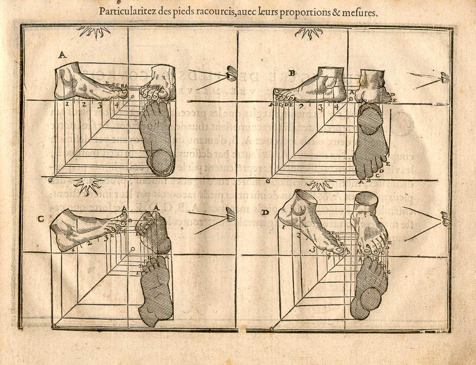 Historical Anatomies On The Web Cousin Jehan