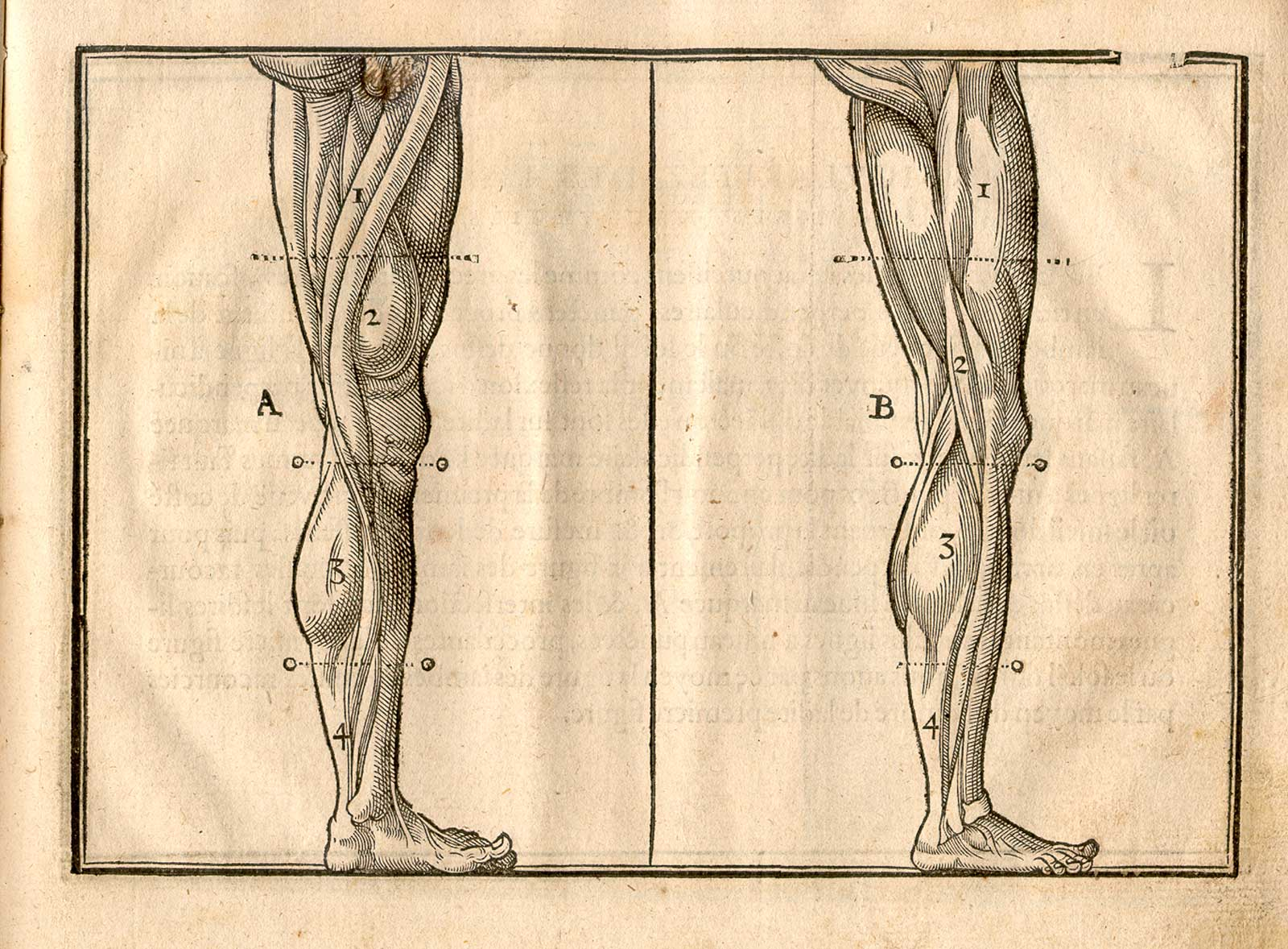 Historical Anatomies On The Web Cousin Jehan