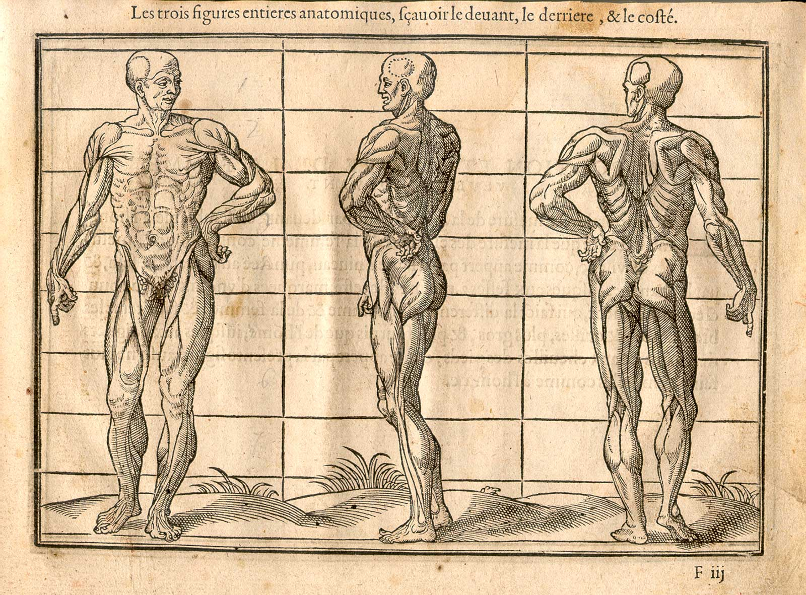 The history of anatomy 1123568 - follow4more.info