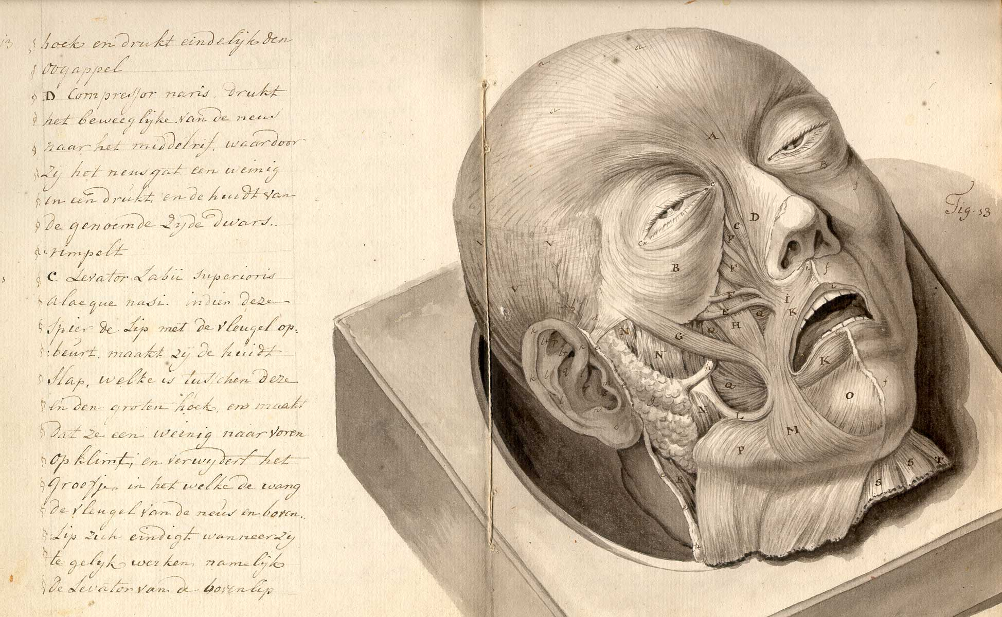 Morbid Anatomy: Anonymous [Treatise on physiognomy. (Netherlands ...