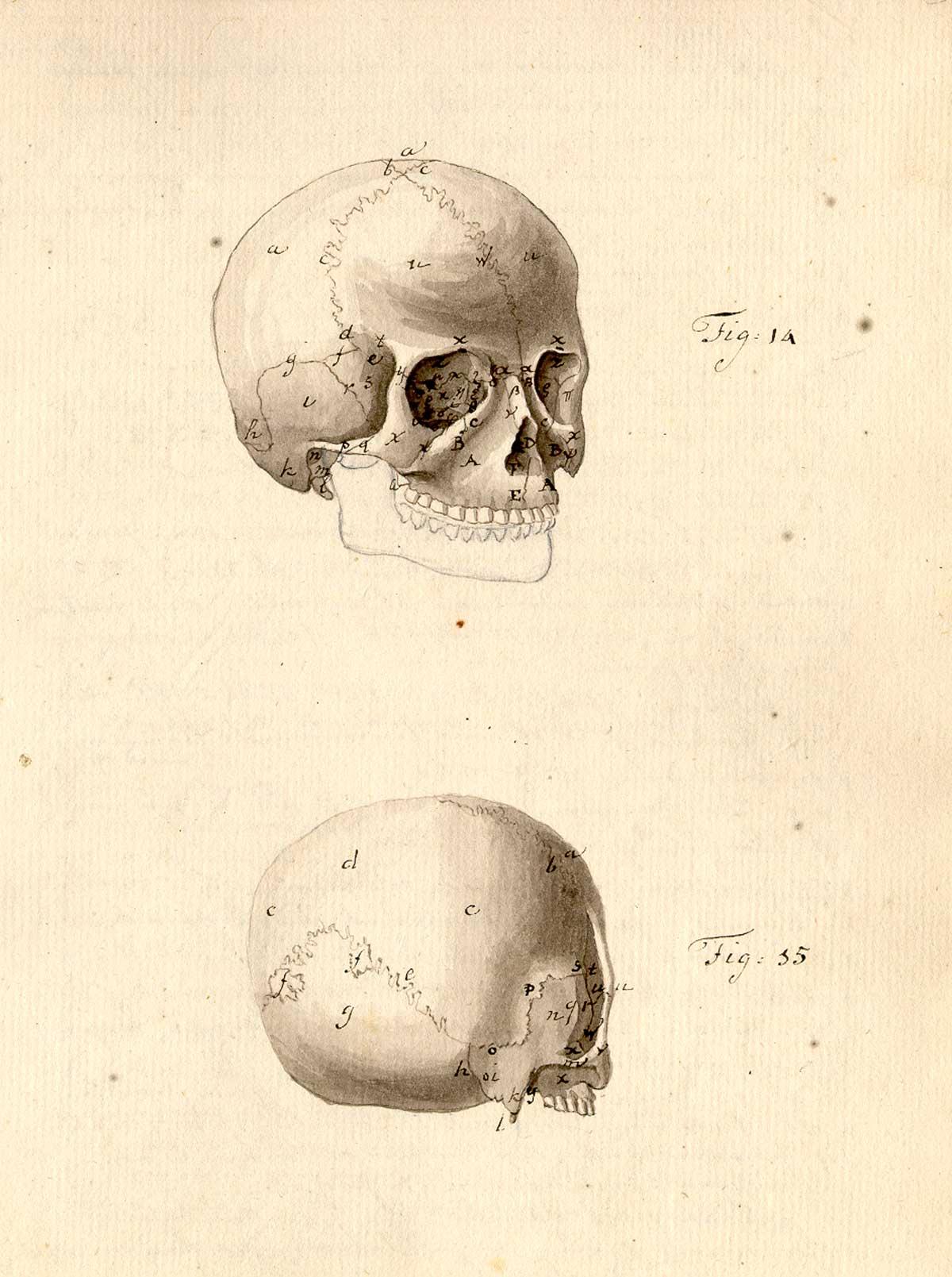 Morbid Anatomy: Anonymous [Treatise on physiognomy. (Netherlands ...