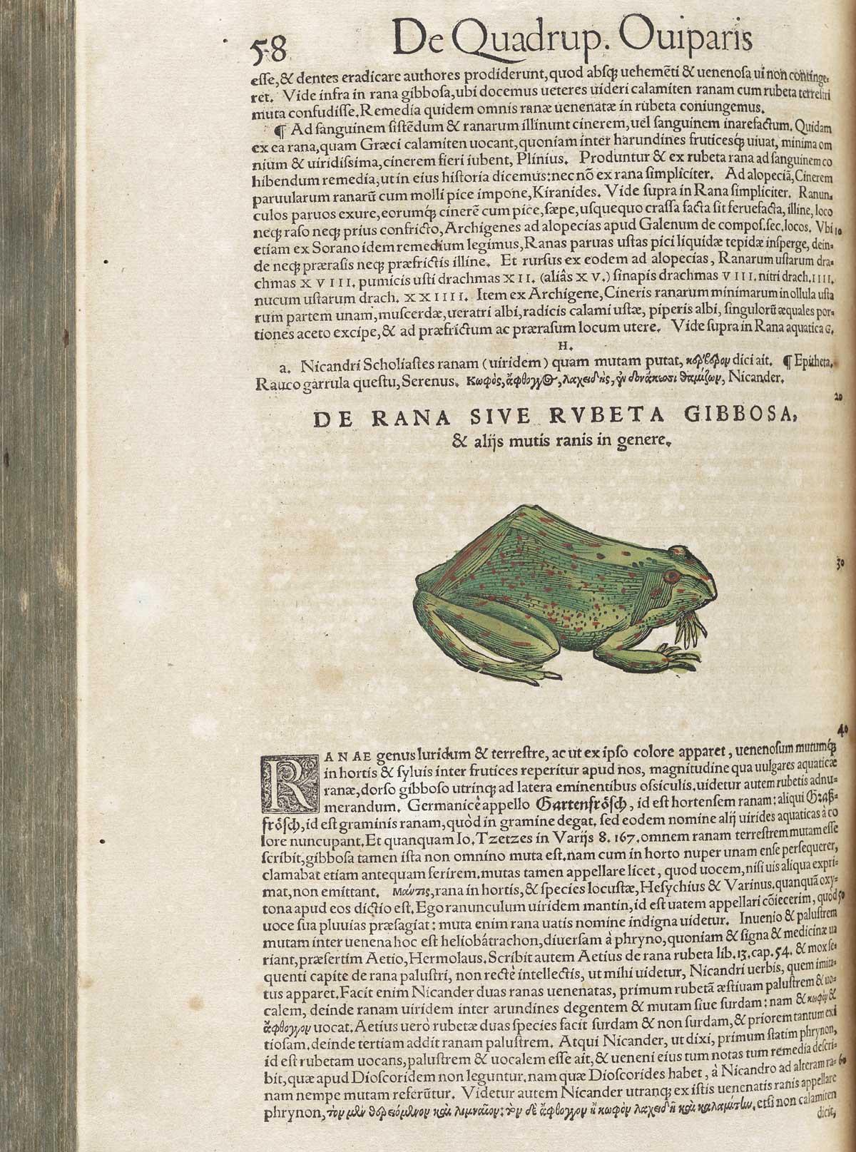 https://www.nlm.nih.gov/exhibition/historicalanatomies/Images/1200_pixels/frog_39.jpg