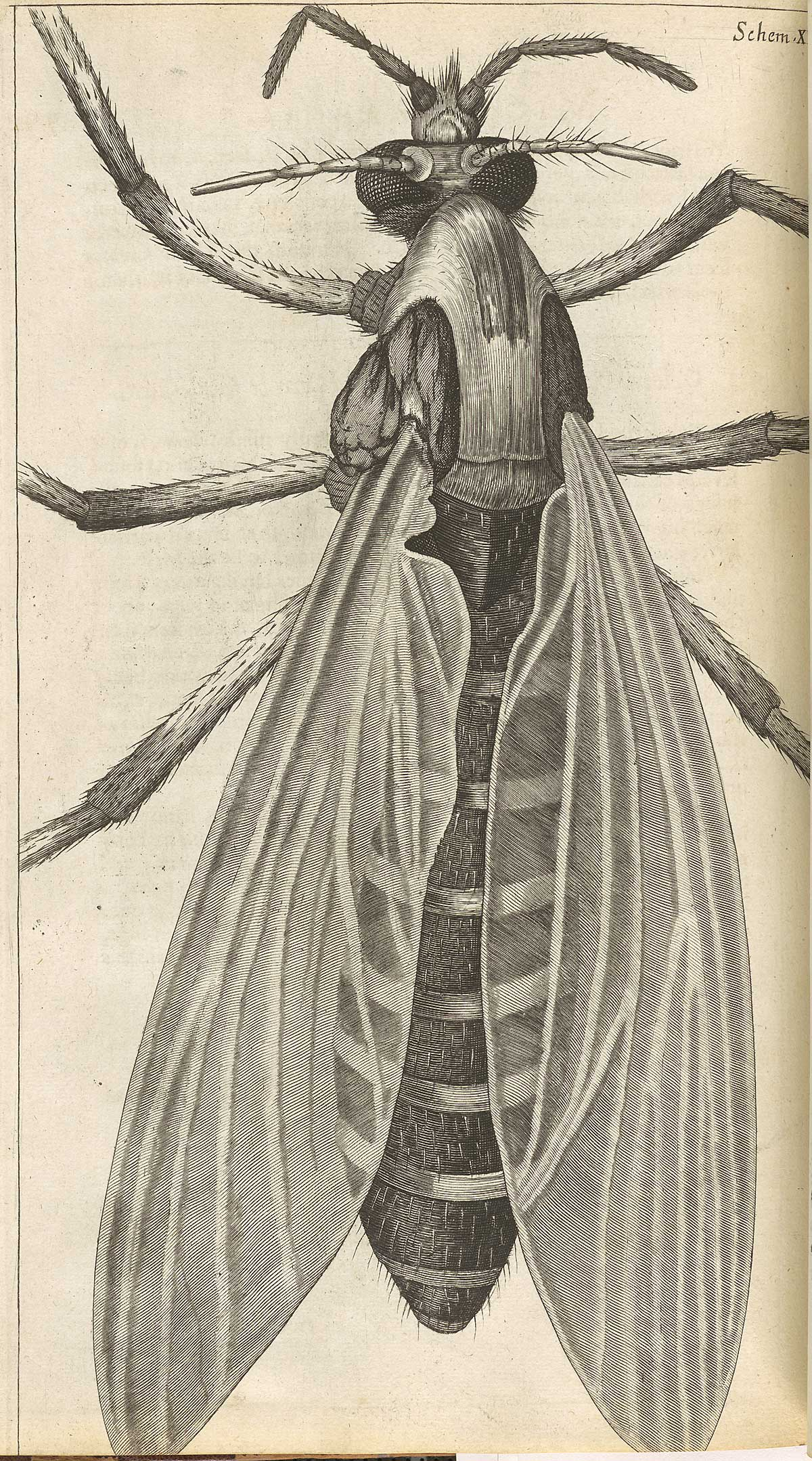 Historical Anatomies On The Web Robert Hookes Micrographia Home