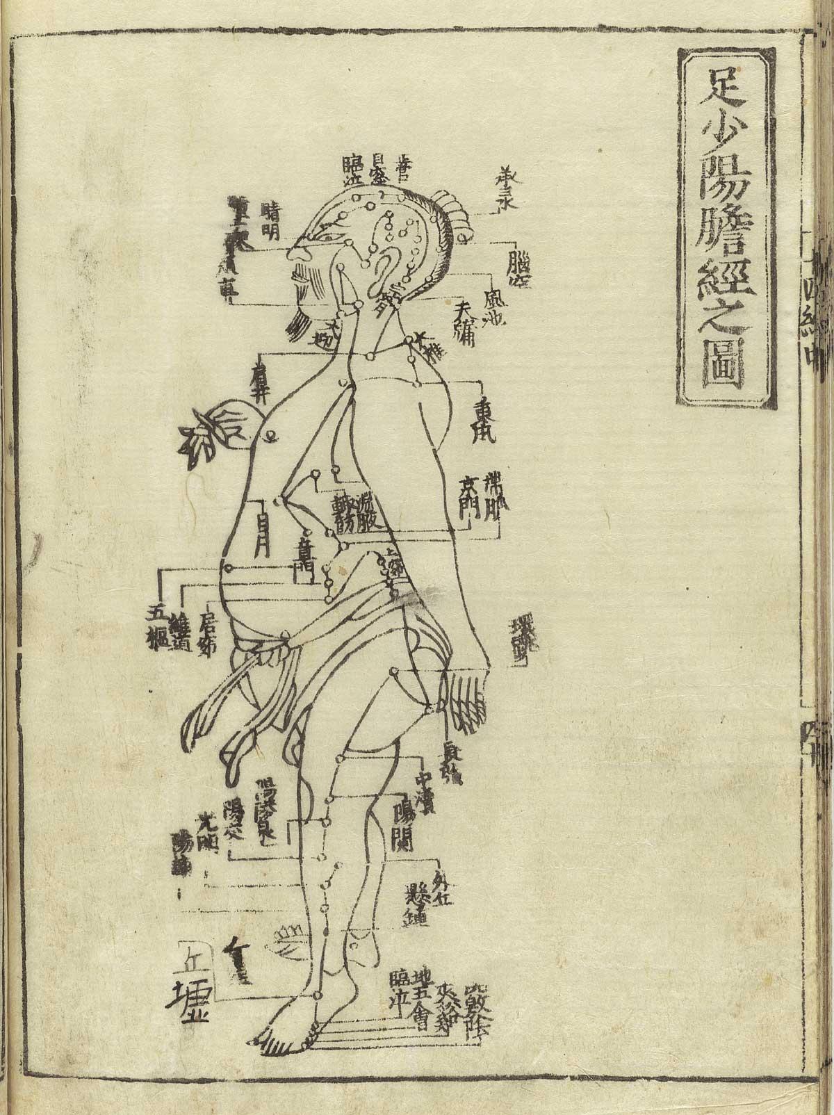 Historical Anatomies On The Web Shou Hua Home