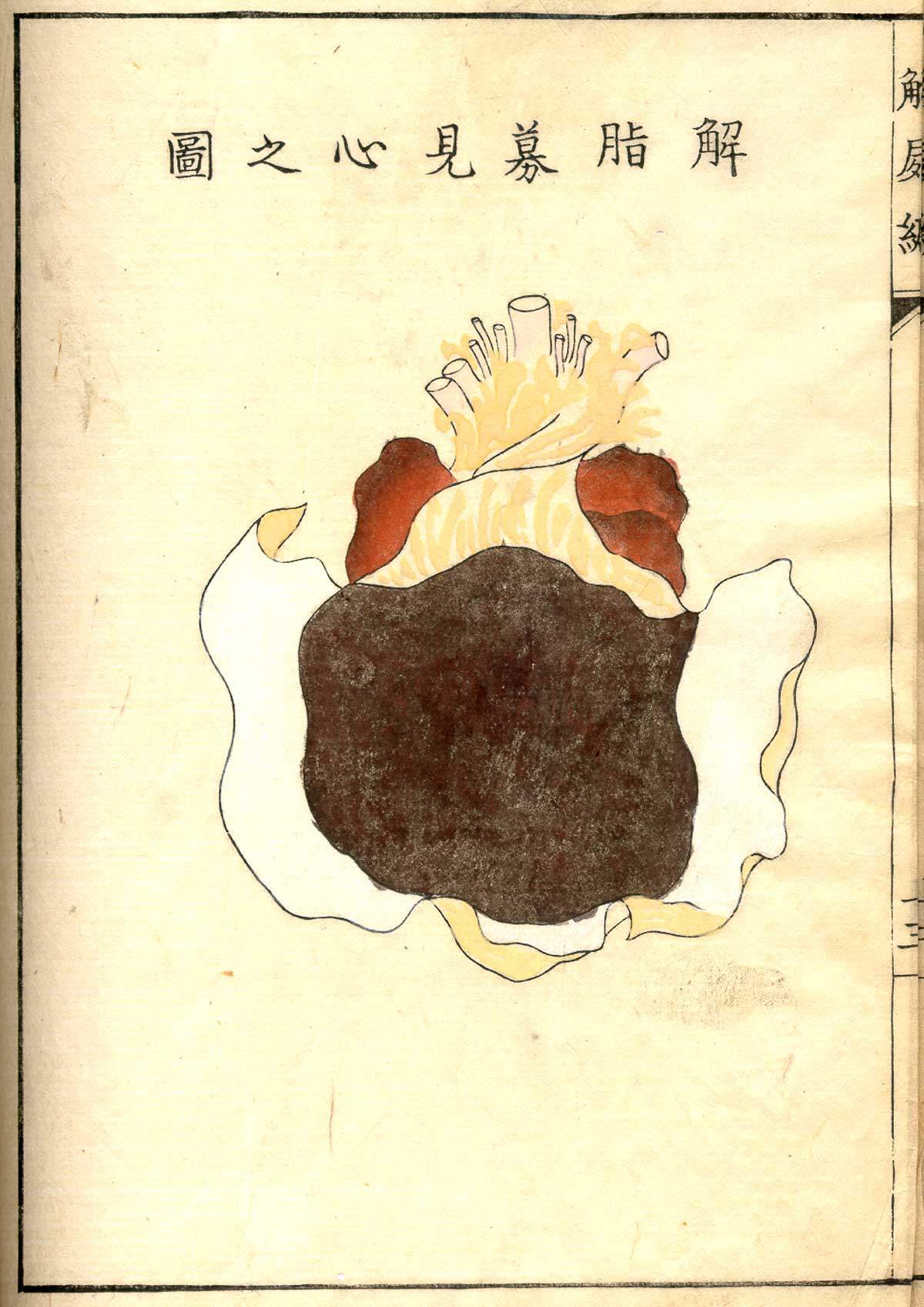Historical Anatomies On The Web Shinnin Kawaguchi Home
