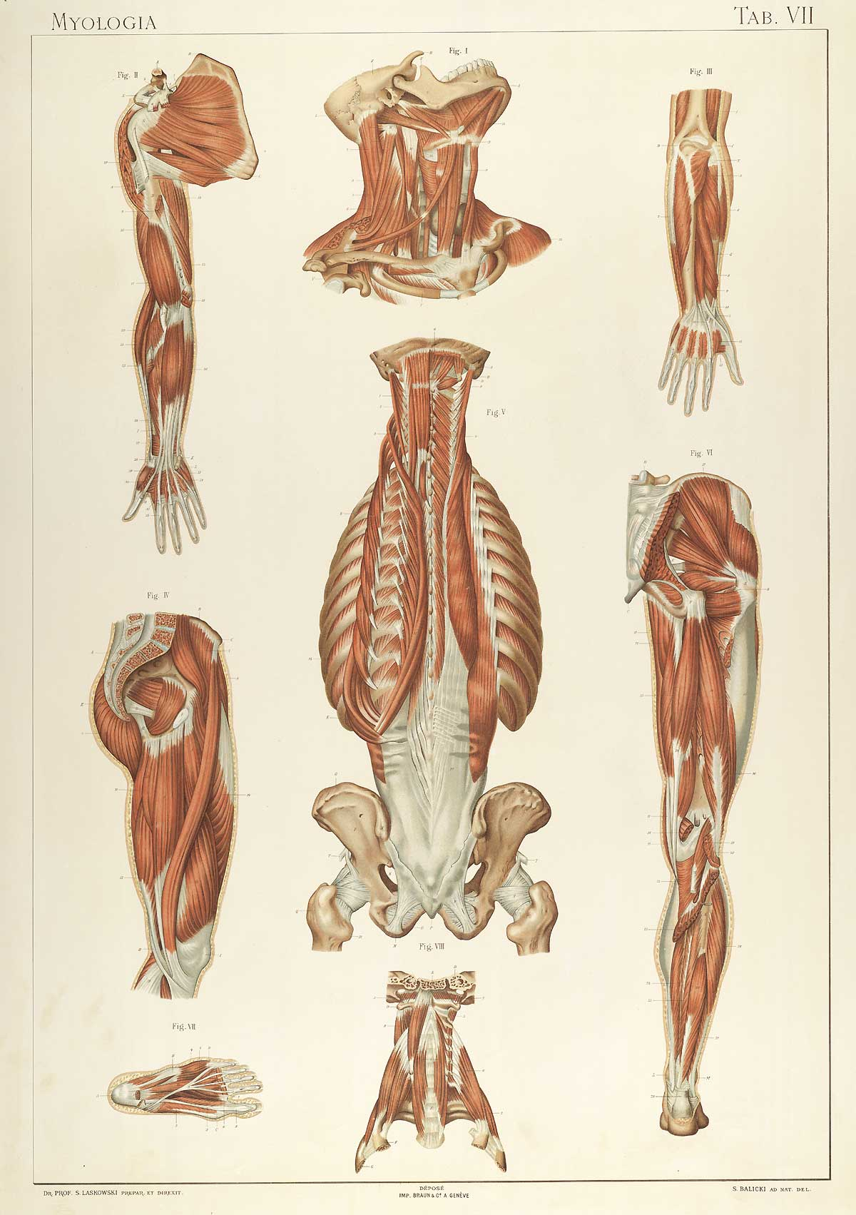 Anatomie normale du corps humain for Interieur du corps humain photo