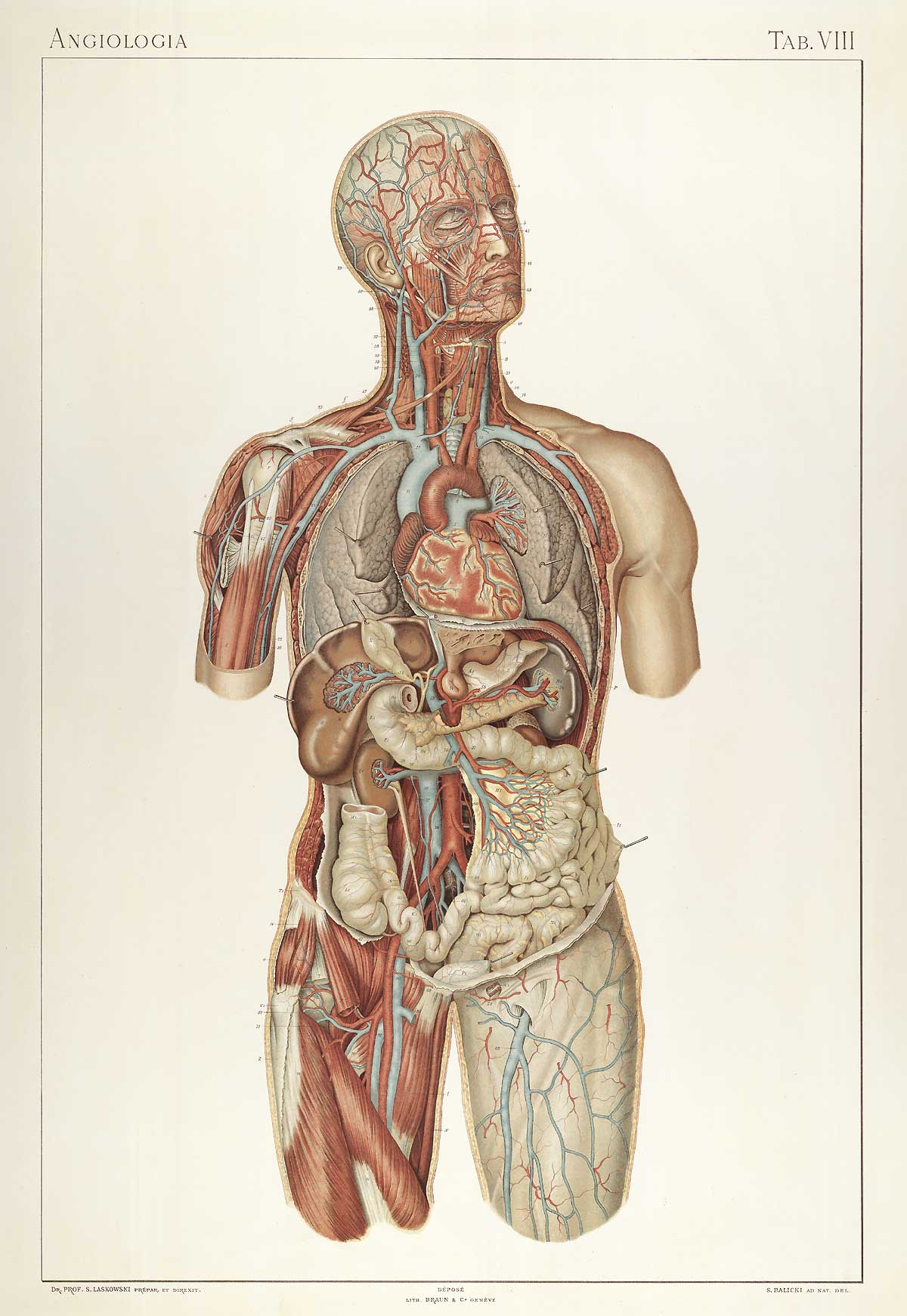 anatomy essays Charles bell was a prolific author who combined his anatomical knowledge with his artistic eye to produce a number of highly detailed and beautifully illustrated books.